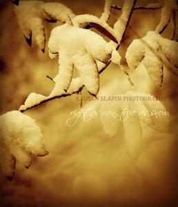 snow leafs DSC_0851_2